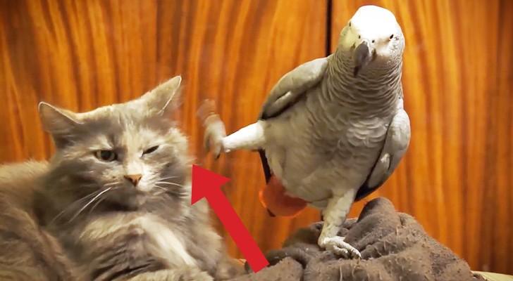 Ce perroquet demande de l'attention de son ami: sa réaction est hilarante!