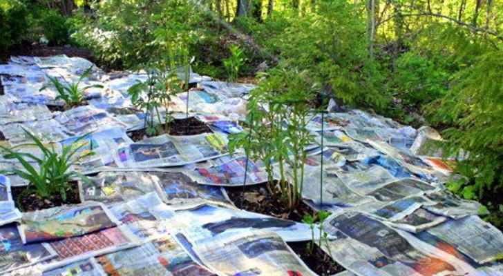 Extiende hojas de diarios en el jardin: mira este truco economico y salva-tiempo!