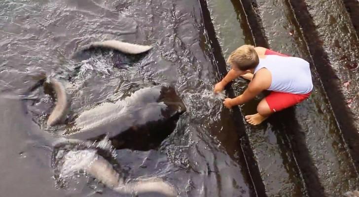 Ein Kind nähert sich dem Ufer. Ihr könnt euch nicht vorstellen, wer ihn begrüßt
