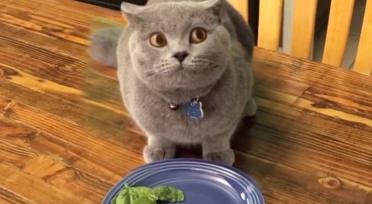 Em 4 segundos este gato culpado vai te fazer rir!