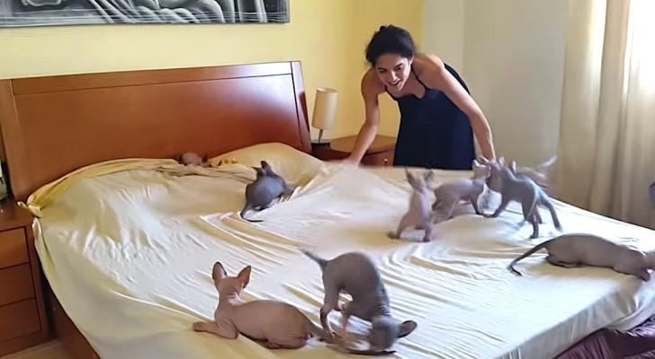 Esto sucede en esta casa cada vez que hay que hacer la cama...es imposible!