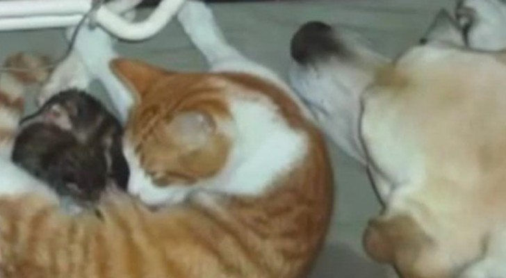 A cat gives birth ... what the dog does immediately after it is hard to believe !
