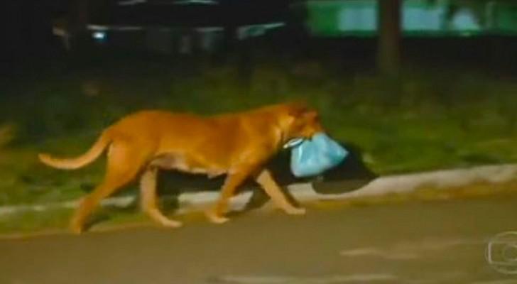 Comienzan a seguir un perro hacia el basural: cuando descubren donde esta llendo quedan conmocionados