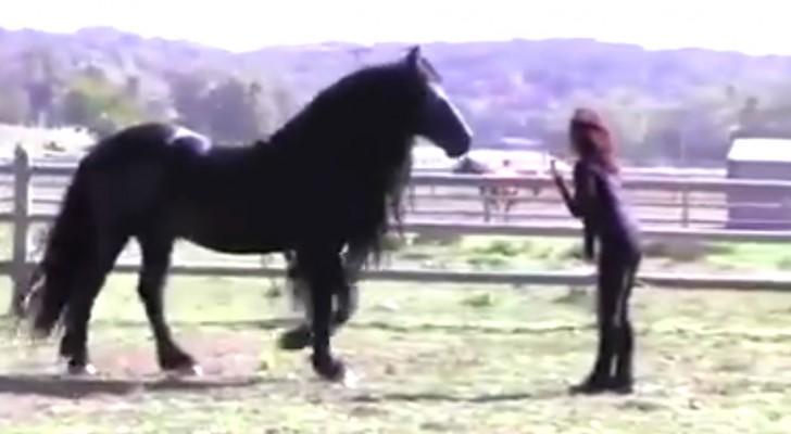 La adiestradora lo llama hacia ella: este caballo MAGNIFICO los dejara sin palabras