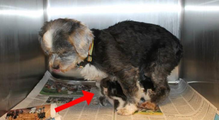 Descienden en un barranco para salvar un perro, pero aquello que encuentran asombra tambien a los veterinarios