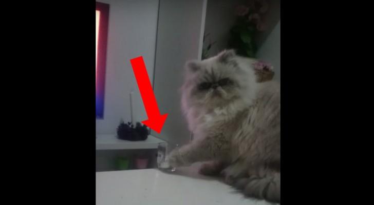 Han går upp på köksbordet och visar det som katten gör bäst... Jätteroligt!