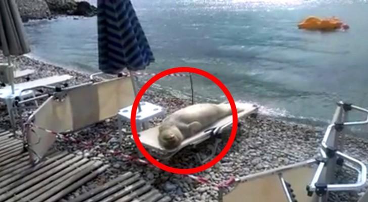 Quand vous verrez qui prend un bain de soleil sur une plage, vous aurez du mal à y croire!