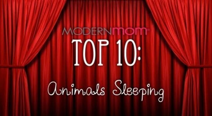 Animais que adormecem