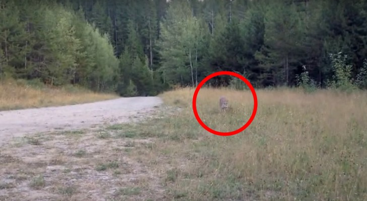 A cyclist notices movements in the grass: someone is following him - and it's not good news!