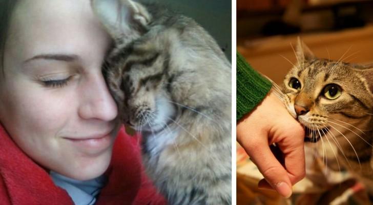 10 modi in cui il gatto vi sta dicendo che vi ama anche for Allontanare i gatti