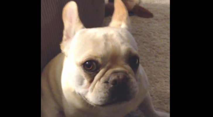 She asks her dog how was his day: and it seems like he has a LOT to say!