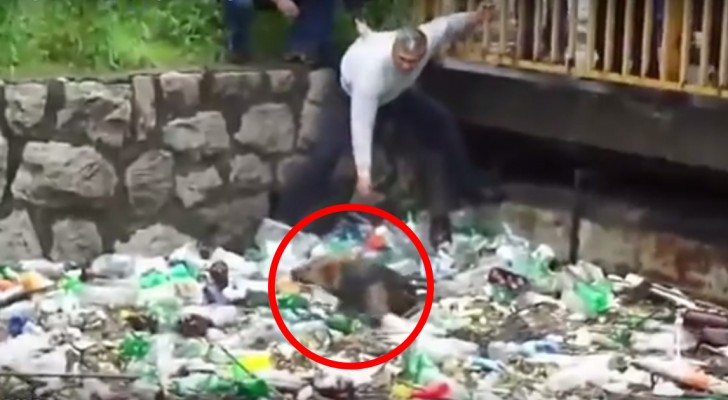 A dog is trapped in a channel, but what happens next will fill you with pride!
