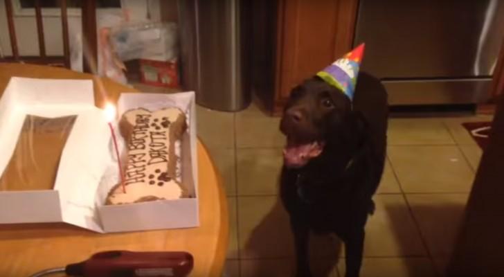 Hier zie je de onhoudbare reactie van een hond die zijn verjaardagstaart ziet