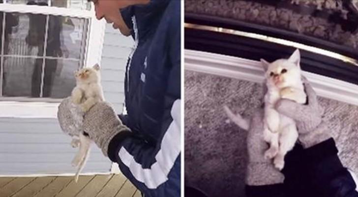 Ils trouvent un chat gelé dans la neige, mais quand ils perdent espoir, l'impensable se produit