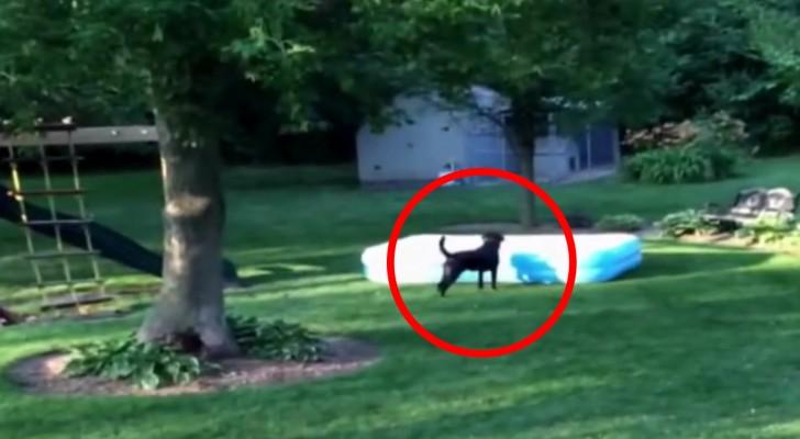 Les enfants se cachent sous la piscine: ce que fait le chien va trop vous faire rire!