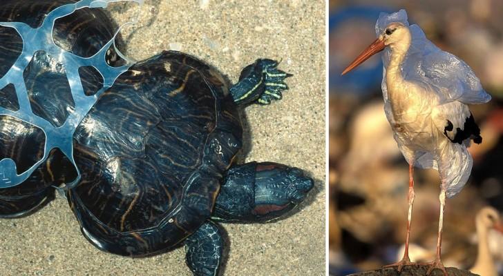 Deze Zorgwekkende Foto's Tonen Het Effect Dat Milieuvervuiling Op Dieren Heeft