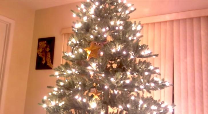 Auf den ersten Blick sieht es wie ein normaler Weihnachtsbaum aus, aber schaut mal genauer hin...