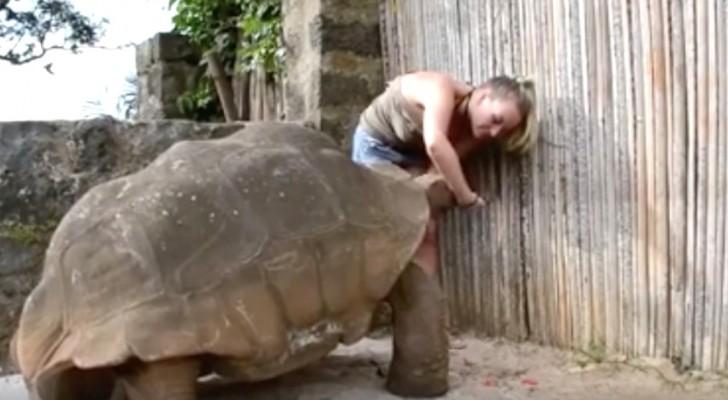 Una tortuga tan grande puede incluso dar miedo, pero miren su comportamiento...