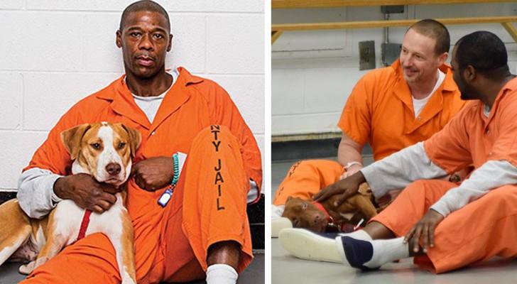 I cani dei canili entrano nel carcere con i detenuti. Gli effetti sono sorprendenti