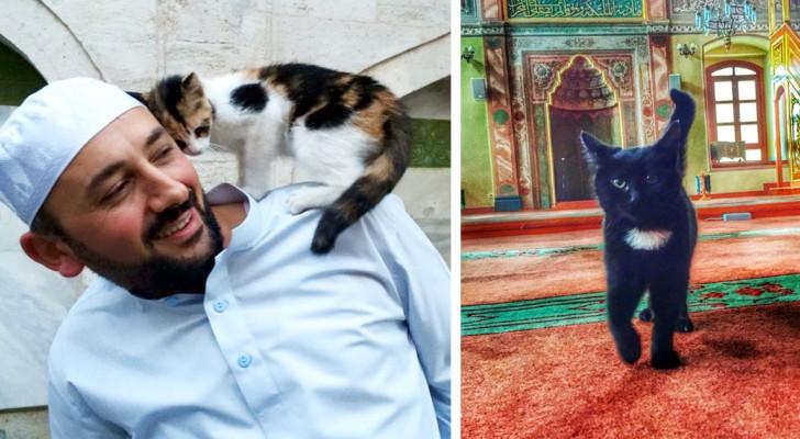 In questa moschea i fedeli pregano circondati dai gatti: il motivo è toccante