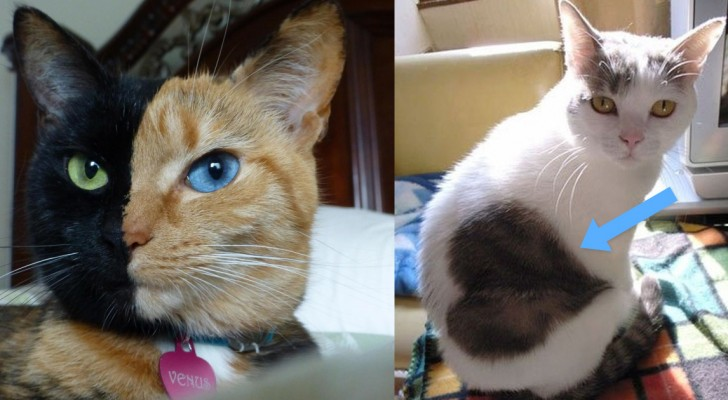 10 Katten Die Op Een Bijzondere En Onmiskenbare Manier