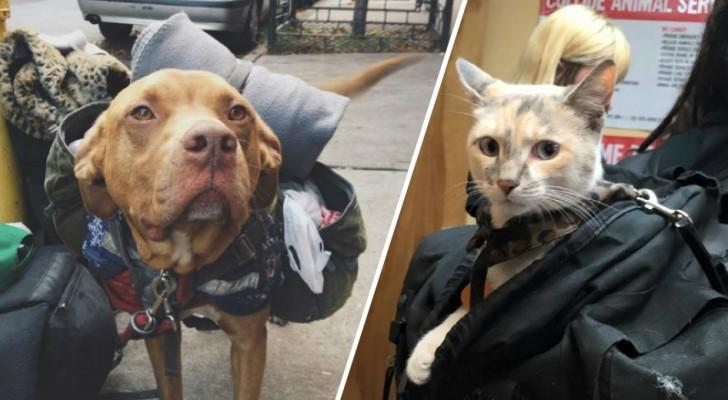 Molti pensano che sia giusto togliere gli animali ai senzatetto: ecco una soluzione DIVERSA