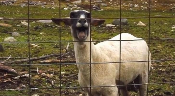Animais que agem em modo estranho
