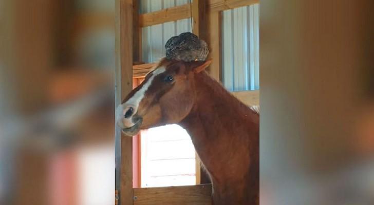 Va a controlar el caballo, pero no se espera de encontrar ESTO sobre su cabeza