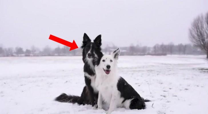 twee honden poseren voor een foto de zwarte hond zorgt ervoor dat het een onvergetelijk. Black Bedroom Furniture Sets. Home Design Ideas