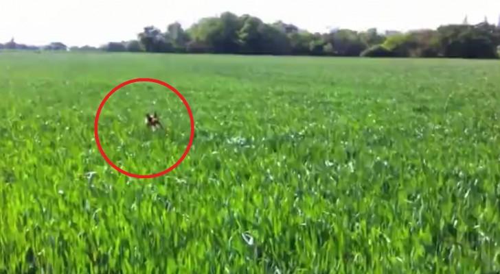 Een hond moet een veld met hoog gras oversteken... de manier waarop hij dit doet is hilarisch