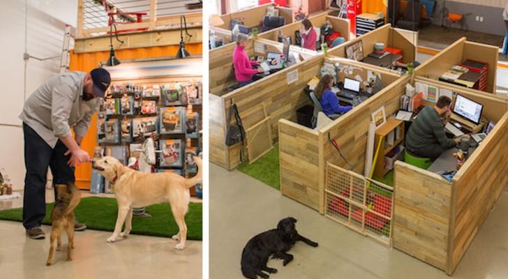 Den Hund zur Arbeit mitnehmen? In diesem Hunde-freundlichen Büro kein Problem!