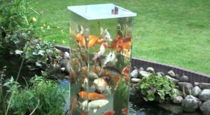 Er stellt sein aquarium im teich auf das ergebnis ist for Aquarium teich