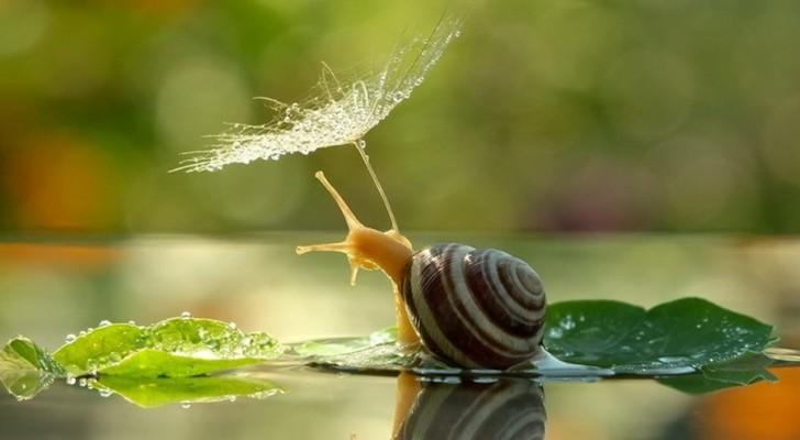 20 zauberhafte Bilder von Schnecken, wie ihr sie noch nie gesehen habt