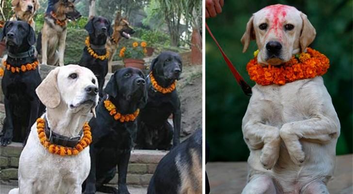 Un festival pour remercier les chiens pour leur fidélité: ces images sont trop belles