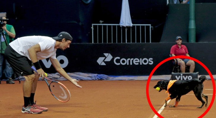 Dogs rescued from the streets are taken to a tennis court -- the reason will make you smile!
