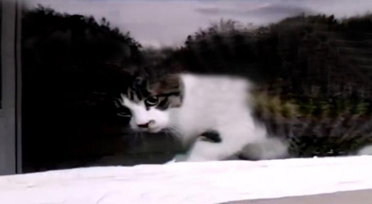 El cartero encuentra el gato sobre la ventana: lo que sucede cada dia es muy divertido