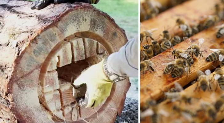 come trasformare un tronco in un 39 arnia funzionante per