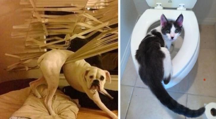 Animali colti sul fatto: le adorabili espressioni di chi vuole negare l'evidenza
