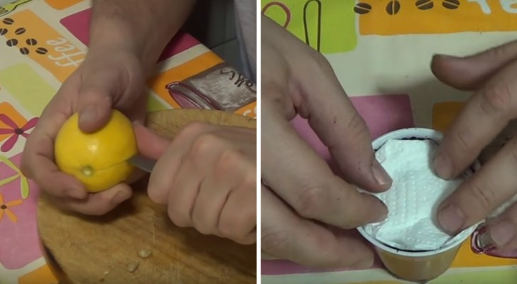 Leer hoe je citroenpitten kunt planten om je eigen citroenboom te laten groeien