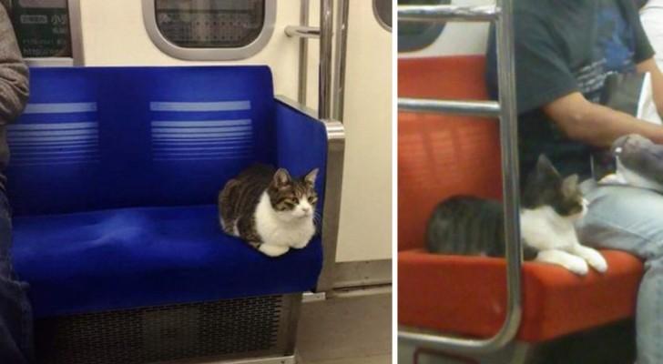 Questo gatto prende regolarmente la metro DA SOLO. Non ci credete? Guardate qui!