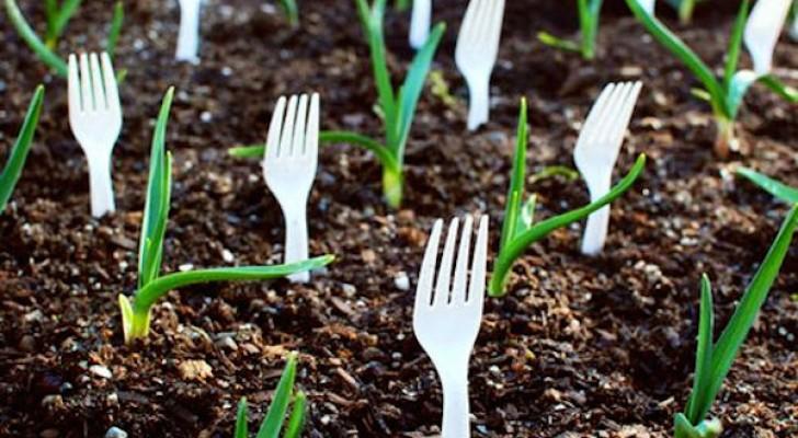 11 truques originais para ajudar a cuidar do jardim