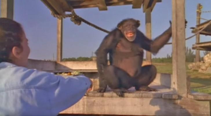 Ha salvato queste scimmie 18 anni prima: ecco cosa avviene quando le incontra di nuovo...