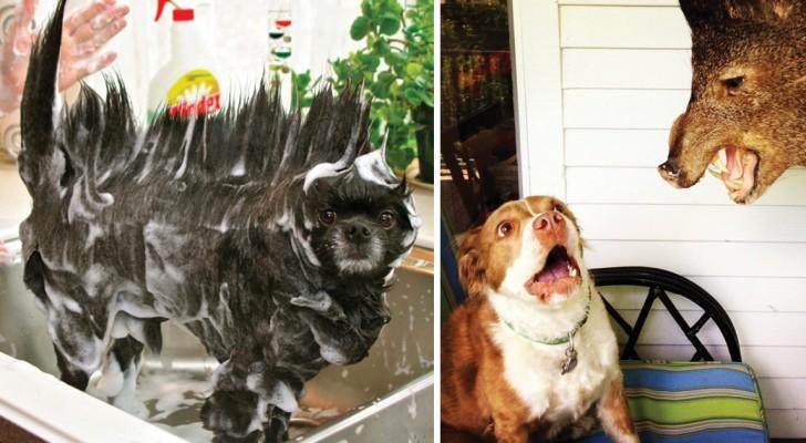 Queste immagini dimostrano che un cane sarà sempre in grado di cambiarvi la giornata