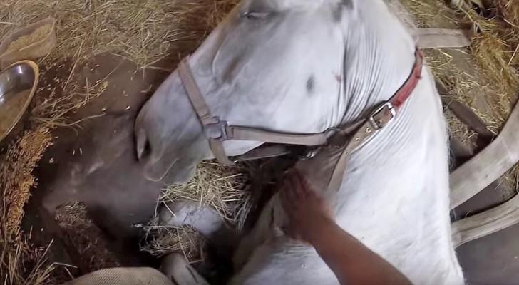 Son cheval est en danger de mort, mais cet homme fera tout pour le sauver