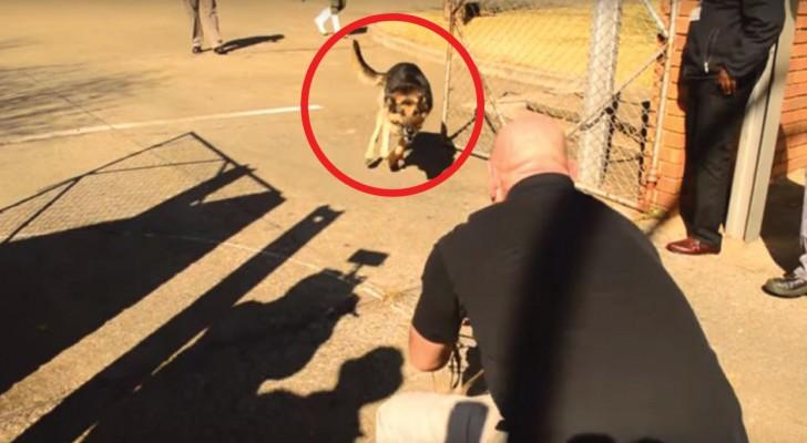 Il cane militare non vede il soldato da 2 anni: guardate quando gli tolgono il guinzaglio...