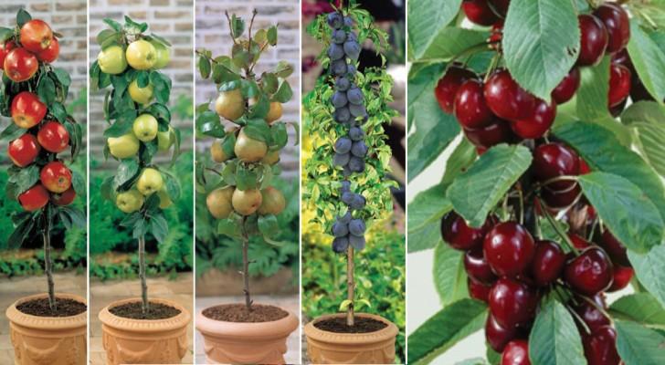 Forse non lo sai ma puoi coltivare la frutta anche se non for Puoi ipotecare la terra