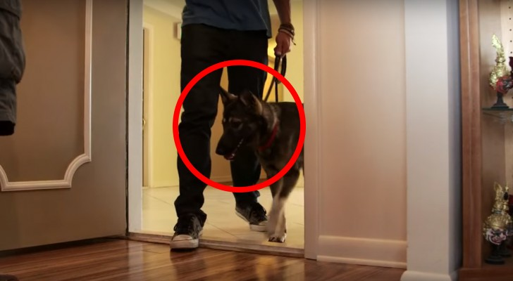 Il offre un chien à sa femme malade d'Alzheimer: leur première rencontre est pleine d'amour