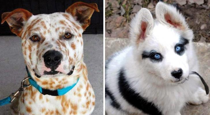 Ecco alcuni cani che madre natura ha voluto trasformare in opere d'arte