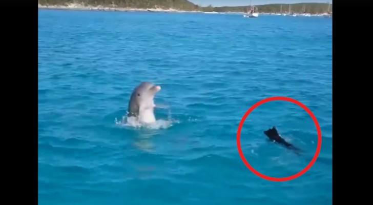 Hun hond werpt zich in het water... de onmiddellijke reactie van de dolfijn is er een van opperste verbazing!