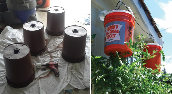 Zo kweek je ondersteboven tomaten in huis... ideaal voor op balkon!